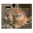 Sea Shell Bronze Sculpture Urn