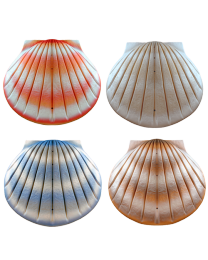 Biodegradable Shell Urn